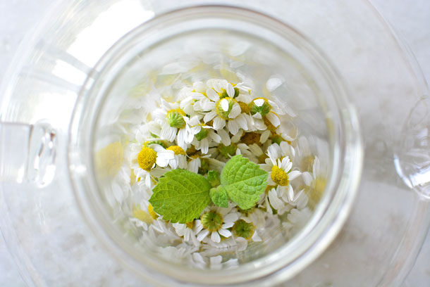 Chamomile Flowers and Mint