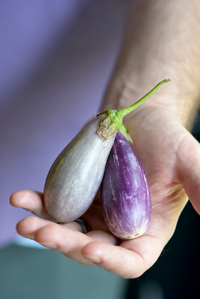 The Size of Fairy Tail Eggplant
