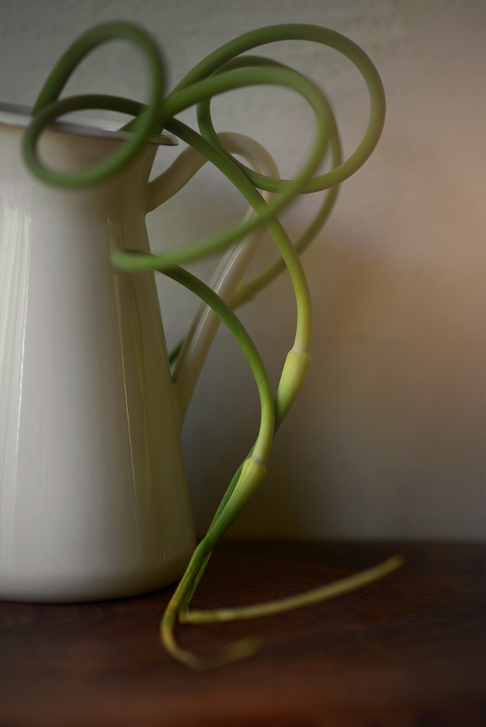 All About Garlic Scapes